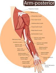 muscle aches in arms